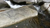 scenérie : Impetuous mountain stream. Water flows between rocks.