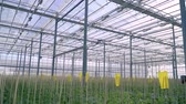 agrícola : eco-farm, greenhouse complex, growing vegetables in greenhouses Vídeos