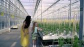 plantation : Orenburg, Russian Federation - February 02, 2018: Mom and daughter are walking on the greenhouse, are greeted against the background of greenhouses Stock Footage