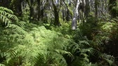 summer : Thick lush green jungle trees, ferns and vines sway gently in the breeze