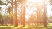 trough : beautiful sunset in the summer park Stock Footage