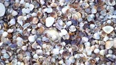 denizyıldızı : Close up lots of different mixed colorful seashells as background. Various corals, marine mollusk and scallop shells. Sea vacation travel and beach holiday tourism concept