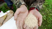 личинка : Man holding a handful maggots for fishing. Fishing worm