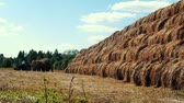industrial background : Farming tractor with hay in a cargo trailer. Agricultural industri Stock Footage
