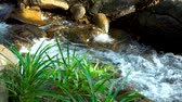 apressando : Water stream flowing among stones in mountain river. Wild landscape with flow stream water in river. Panoramic view wild stony river with fast flow.