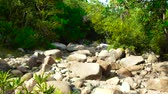river bed : Large rocks and boulders in parched river in jungle. Dry river bed with big stones during drought season. Dry river on drought parched in tropical forest.