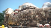 templos : Close up Wind blow at golden paper on sleeping budha statue Vídeos