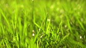 çevre : Blurred Grass Background slow moution Stok Video