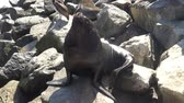 пляжи : Sea lions at a beach
