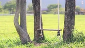dream : swing hanging from a tree in field Stock Footage