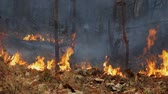 blasting : wildfire  burning in tropical forest ,Thailand Stock Footage