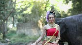 tusks : Asian woman with elephant in creek ,Chiang mai Thailand. Stock Footage
