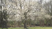 Park in Early Spring Stock Footage