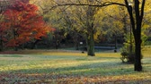 Autumn Leaves in Park Stock Footage