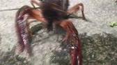 pençeleri : Crayfish move backward