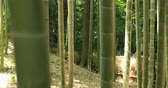 bamboo forest : Bamboo forest at Chikurin park