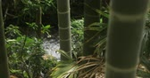 bambus : Bamboo forest by the river at Chikurin park