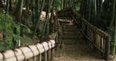 bamboo forest : Bamboo handrail at Chikurin park in Tokyo