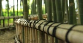bamboo forest : Bamboo road at Chikurin park in Tokyo Stock Footage