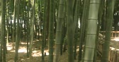 bamboo forest : Rest place at bamboo forest at Chikurin park middle shot right panning Stock Footage