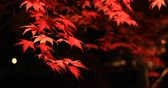 quioto : Illuminated red leaves at the traditional park at Eikandou in Kyoto Japan autumn