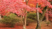 japanse tuin : Red leaves in autumn at Bishamondou at Yamashina district in Kyoto middle shot