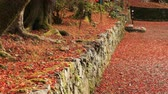 kansai : Red leaves in autumn at Bishamondou at Yamashina district in Kyoto middle shot
