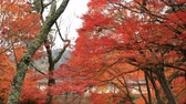 quioto : Red leaves in autumn at Bishamondou at Yamashina district in Kyoto middle shot