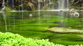 Грузия : Scenic nature of beautiful waterfall and pool of fresh water with green seaplant Стоковые видеозаписи