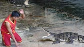 NAKHON PATHOM, THAILAND - February    5 : Crocodile show at Samphran Crocodile Farm , it is one of the most impressive crocodile farm in the world at Nakhon Pathom , Thailand on February 5, 2019