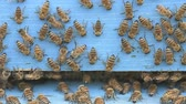 life change : bees cleaning a wooden apiary entrance