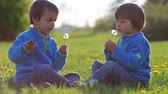 holding : Happy cute caucasian boys, brothers, blowing dandelion outdoors in spring park