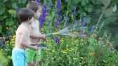 mangueira : Sweet little boy, watering flowers in garden with hose, summertime, his brother playing on tablet and asking him questions Vídeos