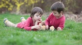tur : Two cute preschool boys, caressing little baby chick in the park, springtime Stok Video
