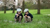 florescente : Two adorable boys, reading a book in a spring blooming park