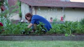 agricultura : Young woman, working in the garden, getting rid of weed from potato rows, springtime Stock Footage