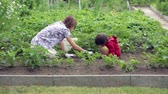 vegetação : Mother and son gardening together in their little garden in the backyard, getting rid of weed from potato rows, springtime