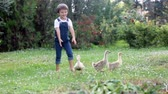 цвести : Adorable preschool children, boy brothers, playing with little ducklings in a garden