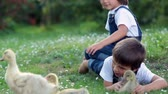 duck : Adorable preschool children, boy brothers, playing with little ducklings in a garden