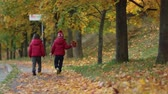 novembro : Two boys, brothers, walking in autumn alley in the park, gathering leaves, playing happily. Children happiness concept