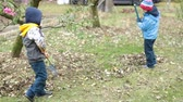 novembro : Young children,  boys, raking leaves in the garden
