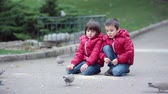 pombo : Two cute children, boy brothers, feeding pigeons in the park, autumn time