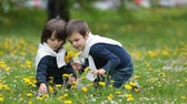 semente : Sweet children, boys, gathering dandelions and daisy flowers in a spring field Stock Footage