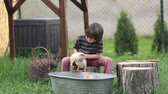 duck : Cute child, playing with ducklings in the backyard, having fun. Childhood happiness concept Stock Footage