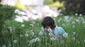semente : Child having fun, blowing dandelions. Childhood happiness concept, boy playing with dandelions