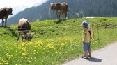 vitela : Happy children walking on a rural path in Swiss Alps, springtime, cows in the field