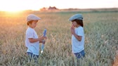 sabão : Two children, boys, chasing soap bubbles in a wheat field on sunset Vídeos