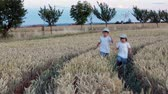 сын : Two cheerful children, boys, walking and running in a wheat field on sunset