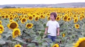 słonecznik : Cute child with sunflower in summer sunflower field on sunset. Wideo