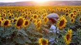 разноцветные : Cute child with sunflower in summer sunflower field on sunset. Стоковые видеозаписи